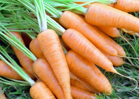 Cà rốt biến đổi gene có thể giúp cơ thể chống lại các virus, vi khuẩn gây bệnh.