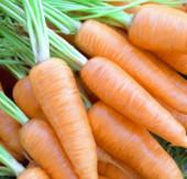 Cà rốt biến đổi gene chống cảm cúm