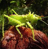 """Những sinh vật """"độc, lạ"""" của rừng thẳm Nam Mỹ"""