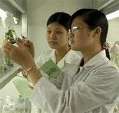 Cần sớm khởi động ứng dụng với cây trồng sinh học