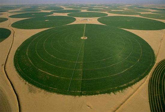 Sa mạc Arab Saudi vẫn rất xanh tươi.