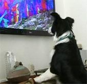 Kênh truyền hình dành cho… cún cưng