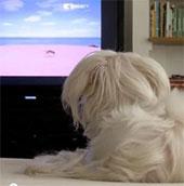Video: Giới thiệu kênh truyền hình dành cho chó
