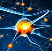 Tìm ra gene giúp trẻ hoá não