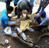 Peru phát hiện hóa thạch một loài bồ nông khổng lồ