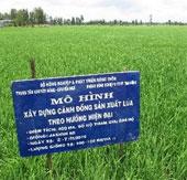 Đồng Tháp sử dụng hiệu quả bốn giống lúa chủ lực