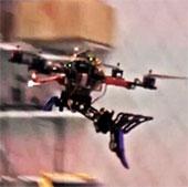 Robot chim bắt mồi giữa không trung