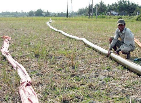 Một cánh đồng thiếu nước ở Trà Vinh. Nông dân phải kéo ống bơm chuyền hàng trăm mét để đưa nước vào ruộng.