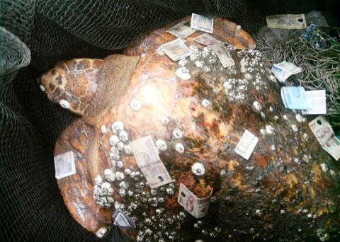 Nhiều người rải tiền lên mai rùa khi nghĩ đó là rùa thần.
