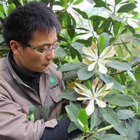 Cây quý hiếm ra hoa sau ba thập kỷ