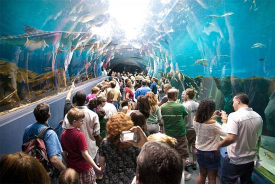 Thủy cung Georgia Aquarium
