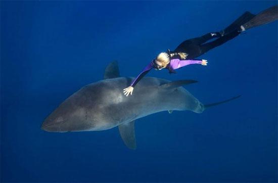 Cá mập trắng, với biệt danh cái chết trắng là loài cá mập lớn, thường xuất hiện ở vùng mặt nước của các đại dương chính. Chúng được coi là loài cá tiền sử lớn nhất còn tồn tại.