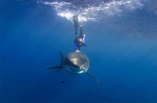Mục đích của cô khi chụp những bức ảnh này là để chứng minh loài cá mập trắng không nguy hiểm như mọi người vẫn nói.