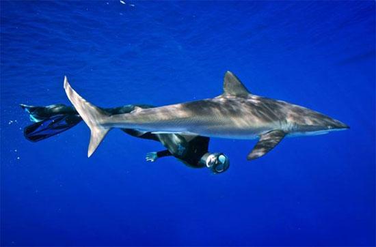 Theo Ocean, cũng có những trường hợp con người bị cá tấn công, nhưng đó chỉ là khi chúng nhầm chúng ta với con mồi của chúng.