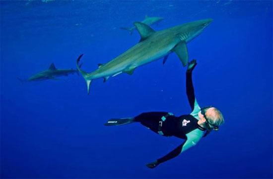 Bộ ảnh này được bạn của Ocean chụp khi cô đang bơi cùng chú cá mập trắng dài hơn 5m tại vùng biển Baja, Mexico.