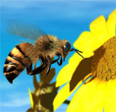 Chính phủ Mỹ bị kiện vì ong