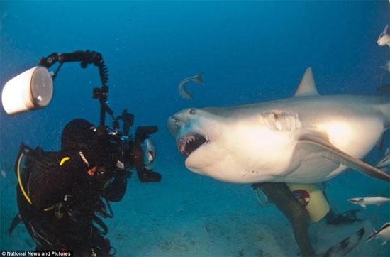 Chu kỳ mang thai của cá mập mako là khoảng 15-18 tháng.