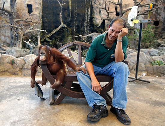 Hai con chồn ecmin đánh nhau. Bức ảnh đoạt giải thưởng của cuộc thi Mammal Society.