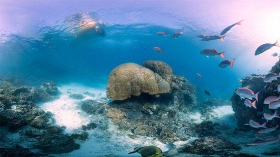 Một số hình ảnh tại rạn san hô khổng lồ Barrier được máy ảnh công nghệ cao chụp