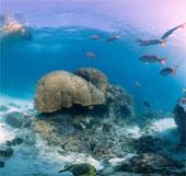 Lập bản đồ san hô toàn cầu