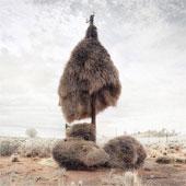 Những tổ chim khổng lồ giữa sa mạc mênh mông