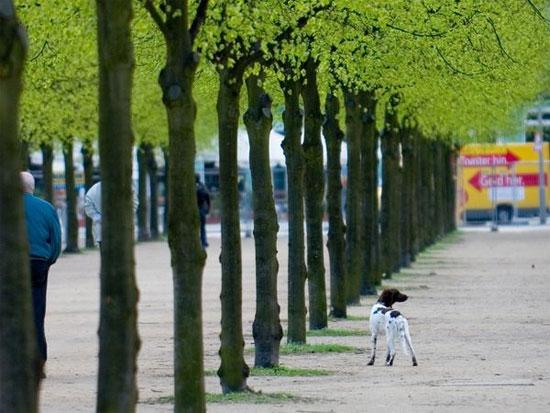 Hàng cây trên một phố ở thành phố Berlin, Đức.