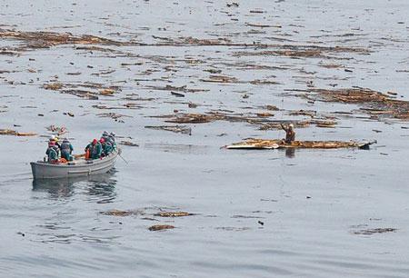 Clip: Chú chó sống sót 21 ngày trên biển sau sóng thần