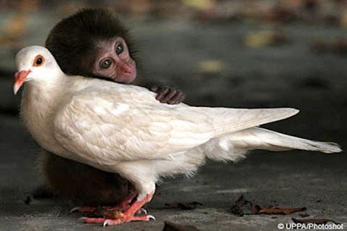 """Tình bạn kì lạ của những loài động vật """"không đội trời chung"""""""