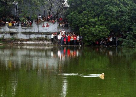 """Căn cứ chứng minh Rùa Hồ Gươm là """"hậu duệ"""" thần rùa"""