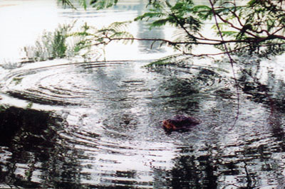 """Có """"Tam đại đồng đường"""" nhà Rùa ở Hồ Gươm?"""