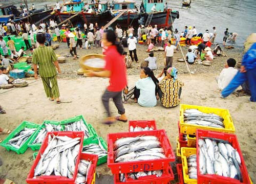 Nước biển Việt Nam bị nhiễm phóng xạ?
