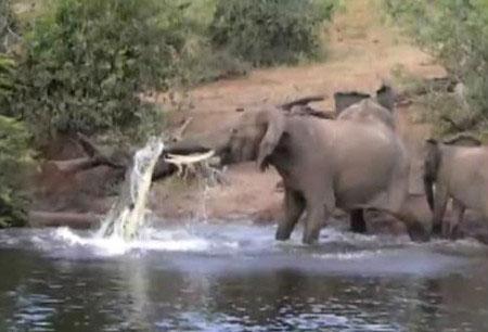 Những clip về động vật hấp dẫn nhất trên mạng tuần qua