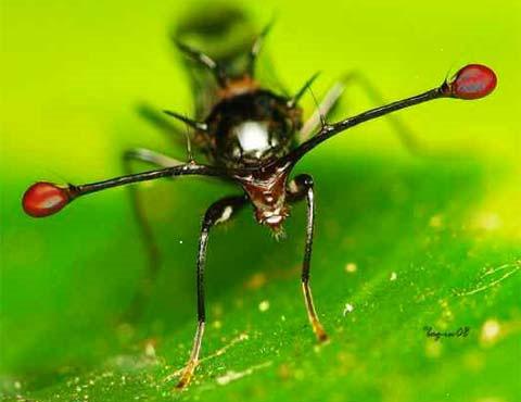 Những cặp mắt dị thường của động vật (II)