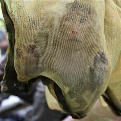 Việt Nam hợp tác với Campuchia về động vật hoang dã
