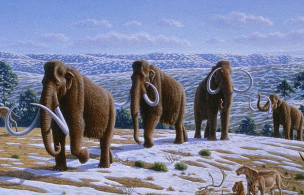 Giả thuyết mới về sự tuyệt chủng của voi ma mút