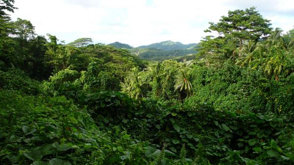 Đo lượng Carbon để cứu rừng nhiệt đới