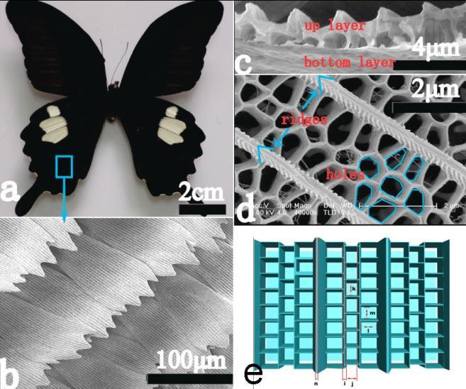 Sử dụng cánh bướm để tạo nhiên liệu xanh