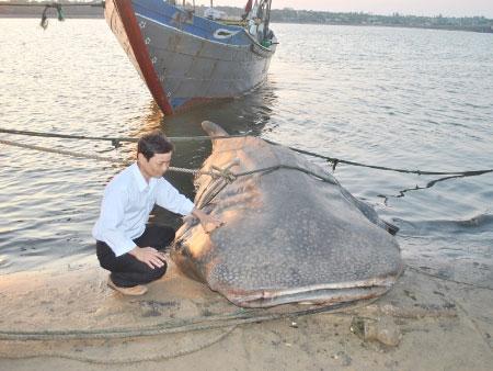"""Bắt được cá """"lạ"""" nặng hơn một tấn"""