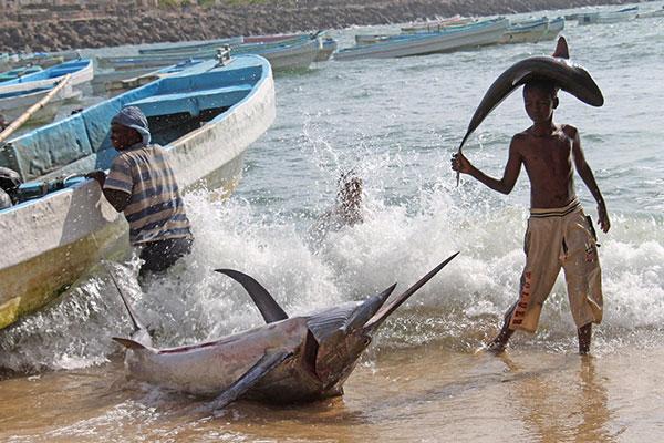 Cậu bé người Somali đội trên đầu một con cá mập con, mang tới khu chợ ở thủ đô Mogadishu. Gần đó là xác một con cá kiếm cỡ lớn vừa được thả xuống từ thuyền chài.