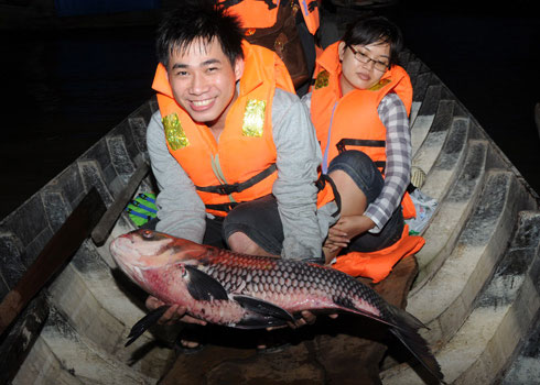 Cá hô bố mẹ đang được chăm sóc tại Trung tâm giống thủy sản An Giang.