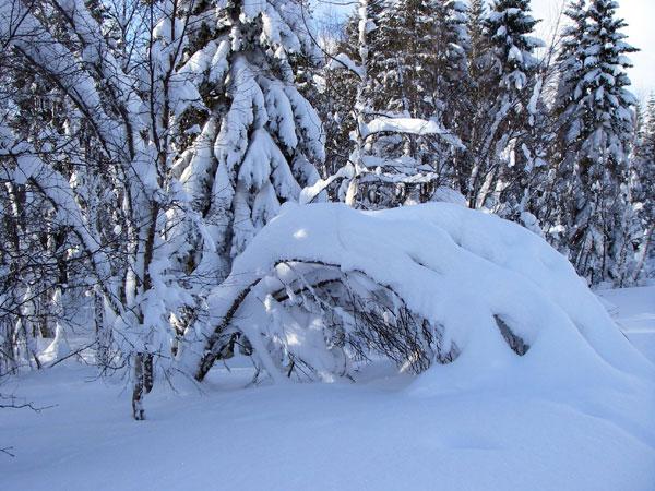 Mỹ: Thành phố Anchorage ngập tuyết tới 3,4m
