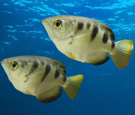 Phát hiện loài cá mới, cực hiếm