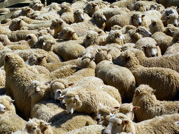 Thiết bị này đã được sử dụng để phát hiện virus gây sốt cho cừu, người ở châu Phi, Trung Đông
