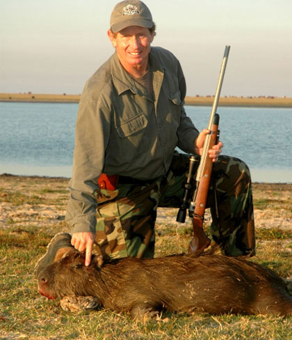Chuột lang được săn bắn làm thực phẩm
