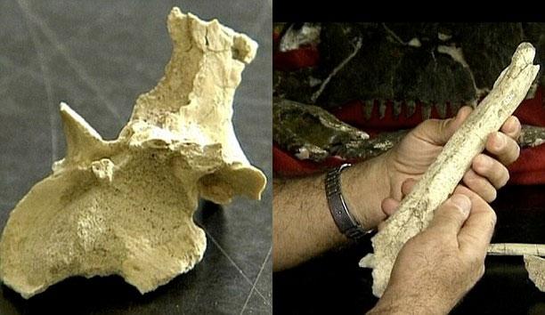 Hóa thạch xương khủng long.