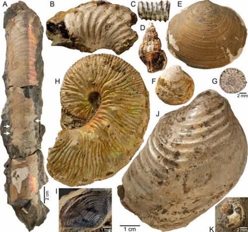 Hóa thạch sinh vật 65 triệu năm tuổi