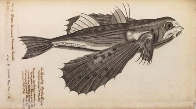 Bức tranh con cá bay