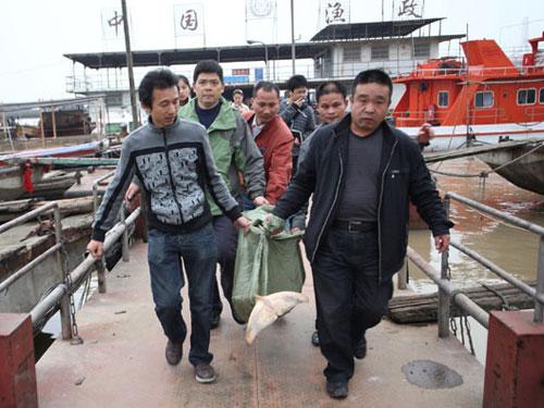 Cá heo không vây chết hàng loạt ở Trung Quốc