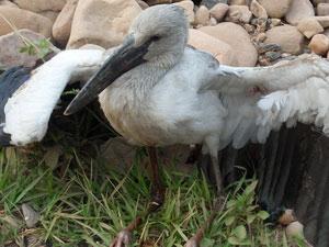 Phát hiện chim lạ lần đầu xuất hiện ở Mường Nhé