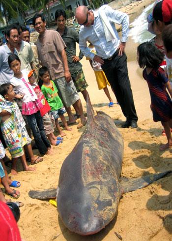 Cá mập sa lưới ngư dân ở vùng biển Quy Nhơn năm 2011.